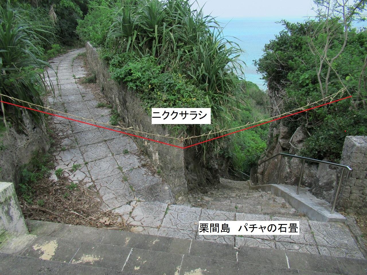 栗間島のニククサラシ